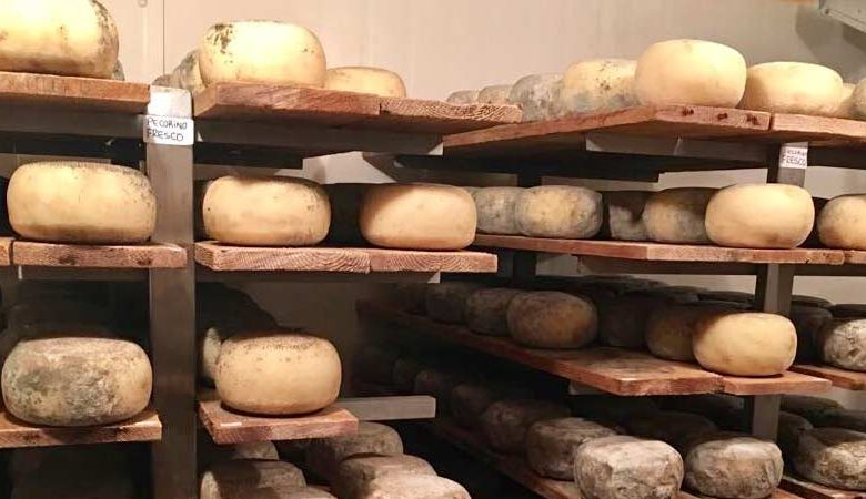 TRF-Cheese-Formaggio-Mozzarella